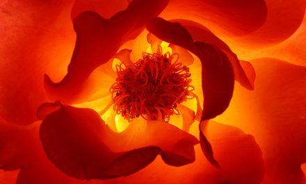 Il seme karmico